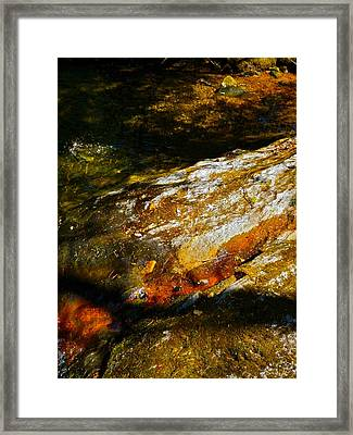 Childs Brook Shadows 4 Framed Print by George Ramos