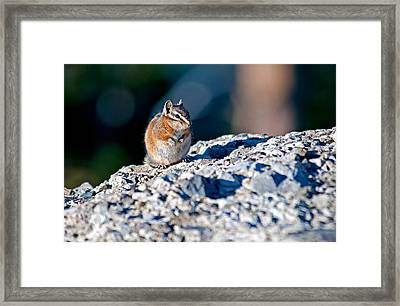 Chipmunk Framed Print by Elijah Weber