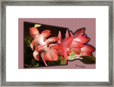 Christmas Cactus Framed Print by EricaMaxine  Price