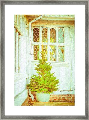 Christmas Tree Framed Print by Tom Gowanlock