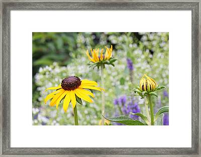 Circle Of Life Framed Print by Becky Lodes