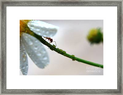 Clean Framed Print by Kendra Longfellow