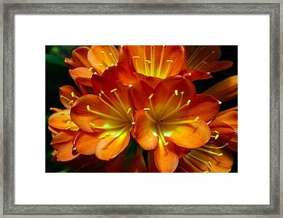 Clivia Bloom Framed Print by PIXELS  XPOSED Ralph A Ledergerber Photography