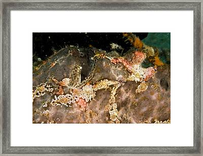 Close View Of A Frogish With Eye Framed Print