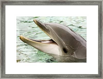 Closeup Of A Bottlenose Dolphin Framed Print by Tim Laman