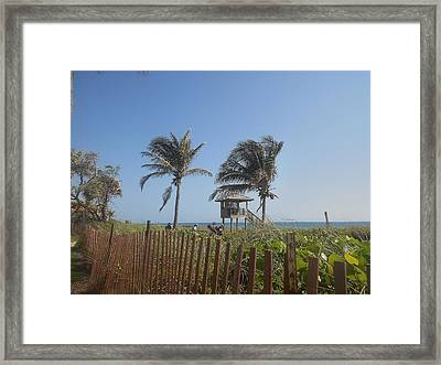 Coastal Life Framed Print by Sheila Silverstein