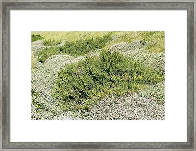 Coastal Vegetation Framed Print by Adrian Bicker