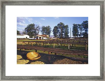 Coffee Plantation Framed Print by Carlos Dominguez