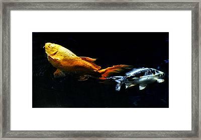 Colorful Koi Framed Print by Don Mann