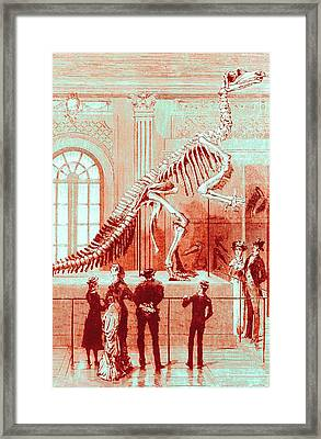 Coloured Engraving Of An Iguanodon Museum Exhibit Framed Print by Mehau Kulyk
