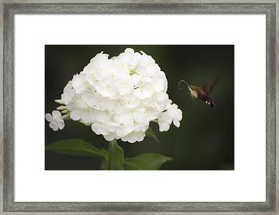 Coming In For A Landing Framed Print by Teresa Mucha