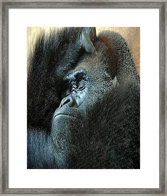 Confidence Framed Print by Skip Willits