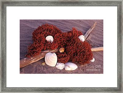 Framed Print featuring the photograph Connecticut Beach Bouquet by Cindy Lee Longhini