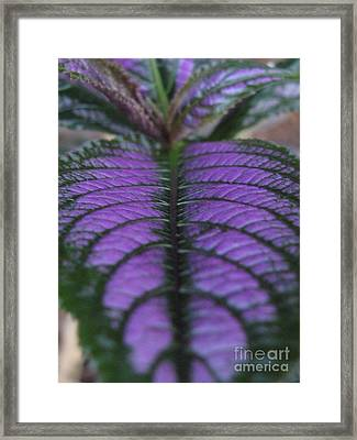 Continuity Framed Print by Tina Marie