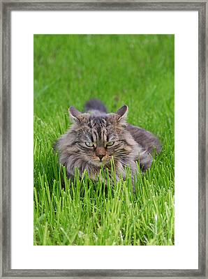Cookie Framed Print by Alberto Sanchez
