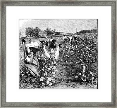 Cotton Industry, Early 20th Century Framed Print