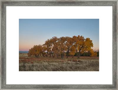 Framed Print featuring the photograph Cottonwood Grove by Monte Stevens