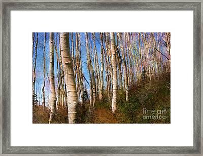 Cottonwood Haze Framed Print by Ron Murphy