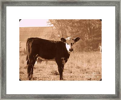 Framed Print featuring the photograph Cow by France Laliberte