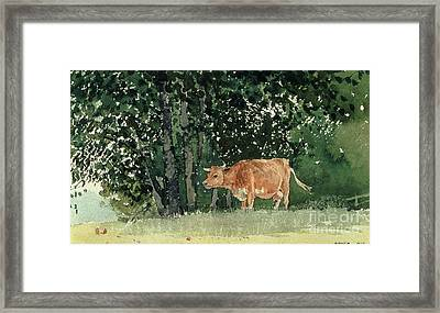 Cow In Pasture Framed Print by Winslow Homer