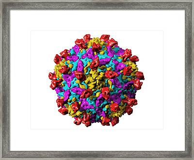Coxsackie B3 Virus Particle Framed Print by Laguna Design
