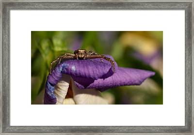 Crab Spider In A Violet Framed Print by Jouko Lehto