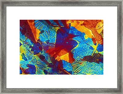 Creatine Phosphate Framed Print by Michael W. Davidson