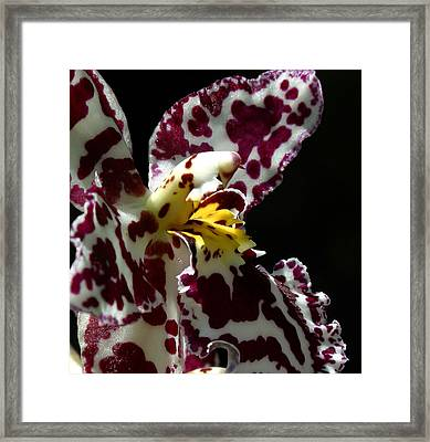 Cribet Exotic Orchids Framed Print by C Ribet