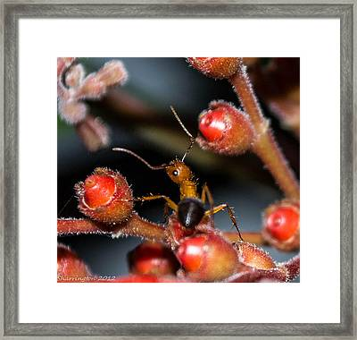 Curious Ant Framed Print