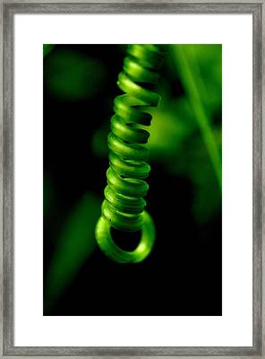 Curly Q Framed Print by Danielle Del Prado