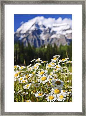 Daisies At Mount Robson Provincial Park Framed Print by Elena Elisseeva