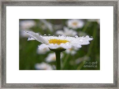 Daisy In The Rain Framed Print by Yumi Johnson