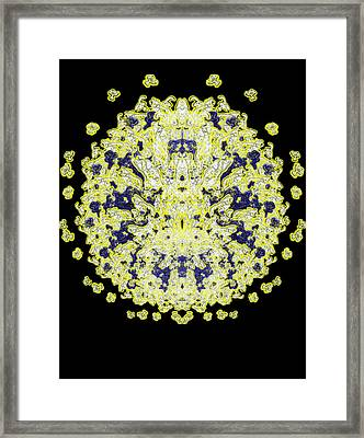 Dandilion Framed Print by Christopher Gaston