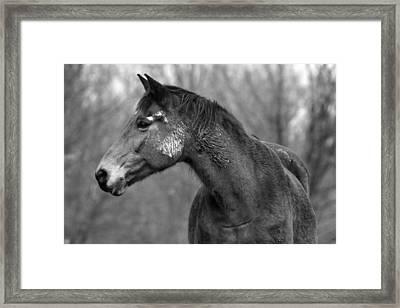 Dark Horse Framed Print by Steve Parr