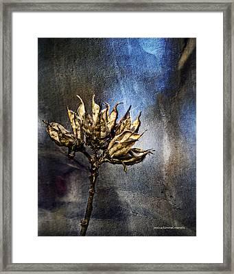 Dead End Framed Print by Jessica Manelis