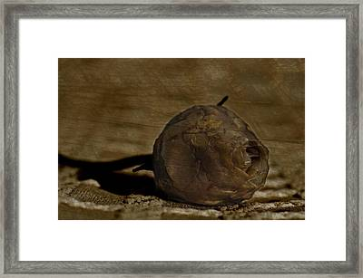 Framed Print featuring the photograph Dead Rosebud by Steve Purnell