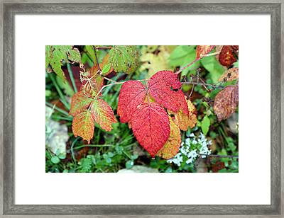 Deep Wood Red Framed Print