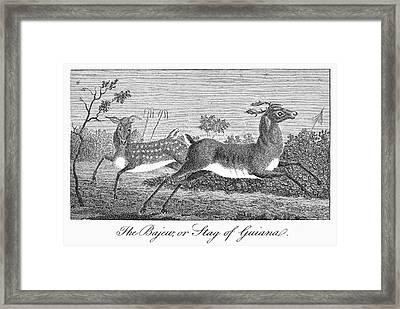 Deer, 1796 Framed Print by Granger