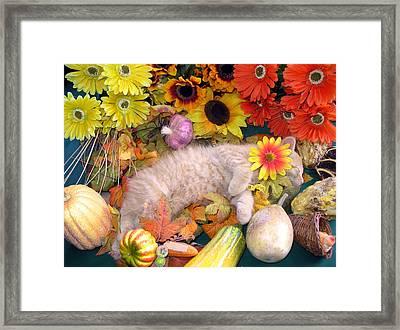 Di Milo - Flower Child - Kitty Cat Kitten Sleeping In Fall Autumn Harvest Framed Print by Chantal PhotoPix