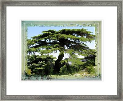 Do-00512 Cedar Forest Framed Print