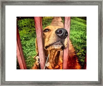 Framed Print featuring the digital art DOG by Beto Machado