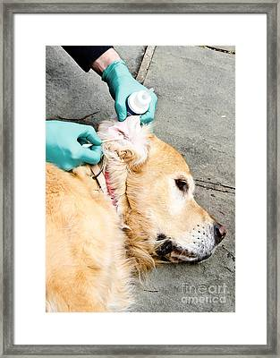 Dog Grooming Framed Print by Photo Researchers, Inc.