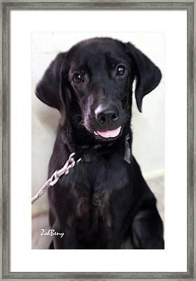 Dog Photography Framed Print by Zoh Beny