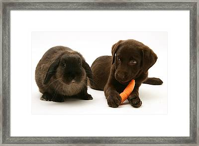 Dog Steals Rabbits Carrot Framed Print by Jane Burton