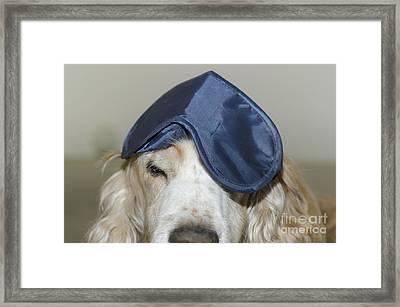 Dog With A Sleep Mask Framed Print by Mats Silvan