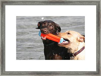 Dogs At The Beach Framed Print by Valia Bradshaw