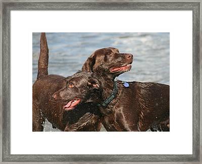Dogs On The Beach Framed Print by Valia Bradshaw