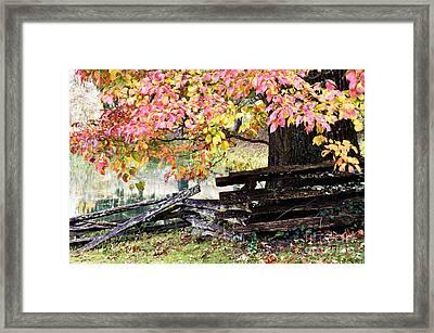 Dogwood And Rail Fence Framed Print by Thomas R Fletcher
