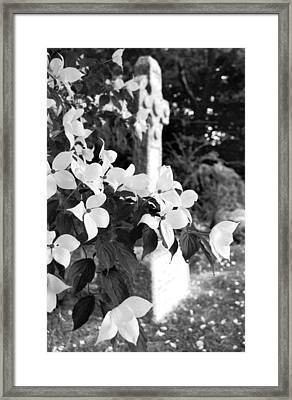 Dogwood In Cemetery Framed Print