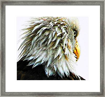 Don't Worry Be Happy Framed Print by Carrie OBrien Sibley